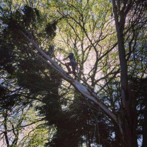 oxford tree surgeon with harness on tree