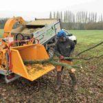removing dead wood in a chipper