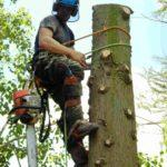 tree surgeon after surgery on tree