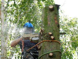tree surgeon cutting down a tree with chainsaw