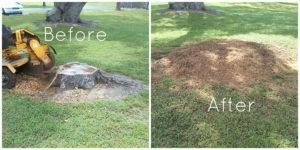 grinding a tree stump before and after in oxford