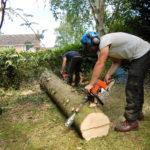cutting down a tree stump