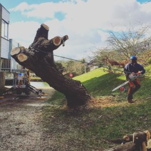 tree surgeon working in Oxford